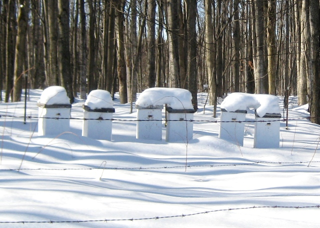 beehives-in-winter